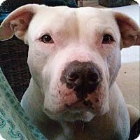 Adopt A Pet :: Marshall - San Antonio, TX