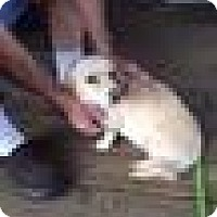 Adopt A Pet :: Sabrina - Rockville, MD