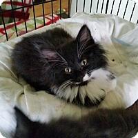 Adopt A Pet :: NJ - Barney & Blaze - Blairstown, NJ