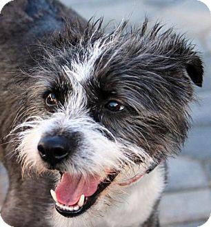 Terrier (Unknown Type, Medium) Dog for adoption in Antioch, California - Antony
