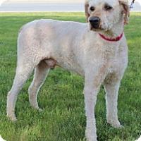 Adopt A Pet :: QUINN - Albany, NY
