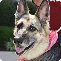 Adopt A Pet :: Layla - Greensboro, NC