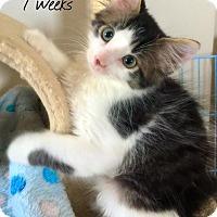 Adopt A Pet :: Lando - Island Park, NY