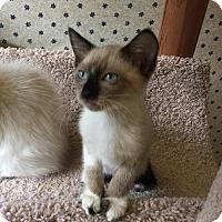 Adopt A Pet :: Camille A - Austin, TX