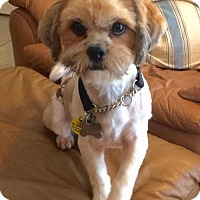 Adopt A Pet :: Bobby Moynihan - Euless, TX