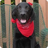 Adopt A Pet :: Eli - Oakland, AR