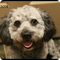 Adopt A Pet :: Grayson - Rockwall, TX