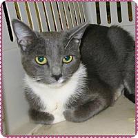 Adopt A Pet :: KID (female) - Marietta, GA