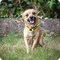 Adopt A Pet :: Coco - greenville, SC