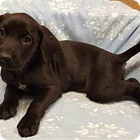 Adopt A Pet :: Dale - Modesto, CA