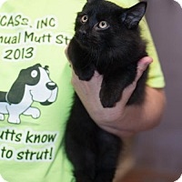 Adopt A Pet :: Bugs - New Martinsville, WV