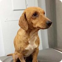 Adopt A Pet :: Albert - Weston, FL