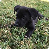 Adopt A Pet :: Freedom - Royal Palm Beach, FL