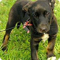 Adopt A Pet :: Baxley - Brattleboro, VT