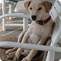Adopt A Pet :: Max - Thomasville, NC