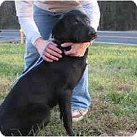 Adopt A Pet :: Lauren L - Cumming, GA