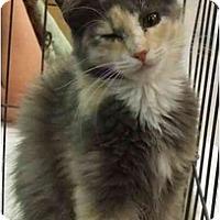 Adopt A Pet :: Precious - Lake Charles, LA