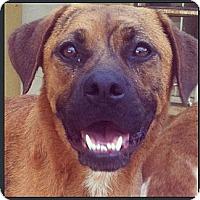 Adopt A Pet :: Frack - Miami, FL