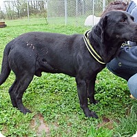 Adopt A Pet :: Jax - Franklin, KY