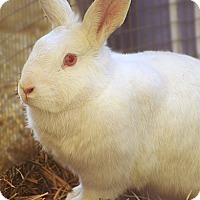 Adopt A Pet :: Miss Dot - Santa Barbara, CA