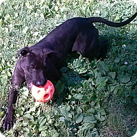 Adopt A Pet :: Emmy - Oberlin, OH