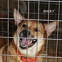 Australian Kelpie Mix Dog for adoption in Lone Oak, Texas - Rocky