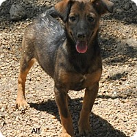 Adopt A Pet :: Alli meet me 8/21 - East Hartford, CT