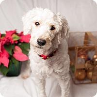 Adopt A Pet :: Betty Lou - Irvine, CA