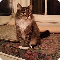 Adopt A Pet :: NJ - Lucy - Blairstown, NJ