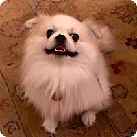 Adopt A Pet :: Zuki - Windermere, FL
