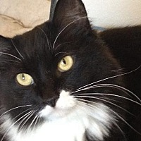 Adopt A Pet :: Zumi - Lancaster, CA
