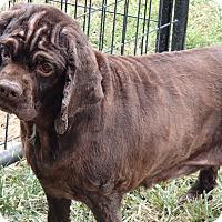 Adopt A Pet :: Lucy - Menomonee Falls, WI