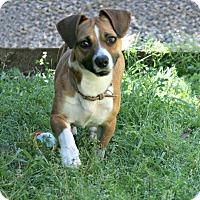 Adopt A Pet :: Ginny - Lufkin, TX