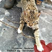 Adopt A Pet :: Teddy - Brooklyn, NY