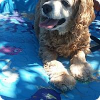 Adopt A Pet :: Venus - Santa Barbara, CA
