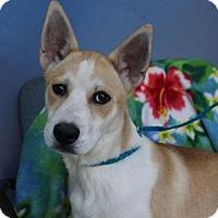 Adopt A Pet :: SHILOH - Red Bluff, CA