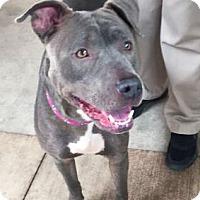 Adopt A Pet :: Rosemary - San Diego, CA