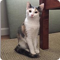 Adopt A Pet :: Red - Southington, CT