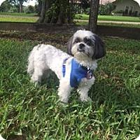Adopt A Pet :: Zeppelin - Davie, FL