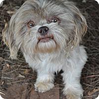 Adopt A Pet :: Norris - Atlanta, GA