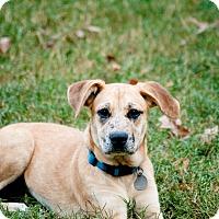 Adopt A Pet :: Annie - Nashville, TN
