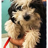 Adopt A Pet :: Trey - Los Alamitos, CA