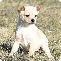 Adopt A Pet :: Nala - Mechanicsburg, PA