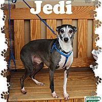 Adopt A Pet :: Jedi - Fallston, MD