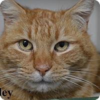 Adopt A Pet :: Stanley - Fryeburg, ME