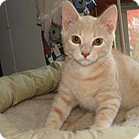 Adopt A Pet :: Jack - Spotsylvania, VA