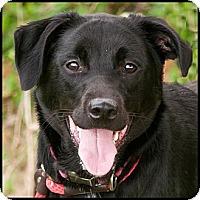 Adopt A Pet :: Mya - Westfield, NY