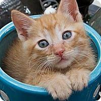 Adopt A Pet :: Freddy - Irvine, CA