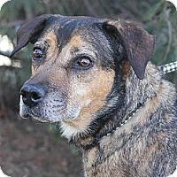 Adopt A Pet :: Bonnie - Springfield, IL