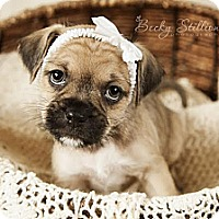 Adopt A Pet :: Macy - Wytheville, VA